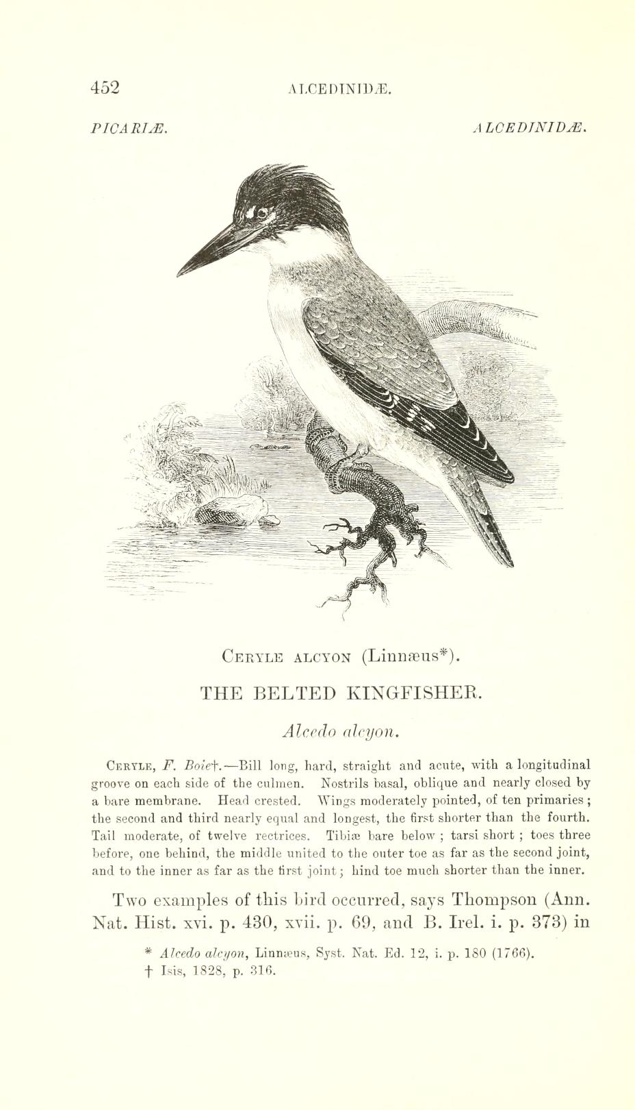 page image including text and a black and white illustration of a male belted kingfisher.